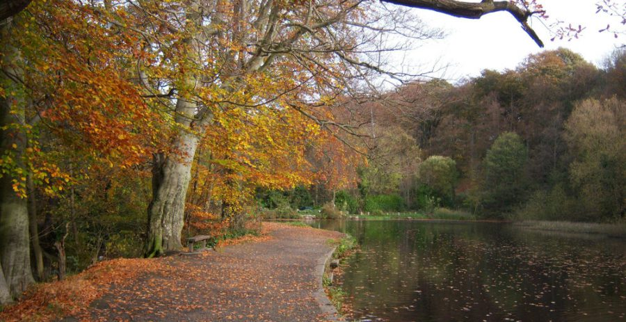 The beech trees along the dam wall of Walkley Bank Tilt (Havelock Dam) provide rich autumnal colours. Photo: P. Machin, 2009.