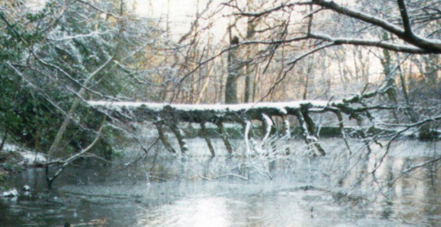 'Frank' the dinosaur tree