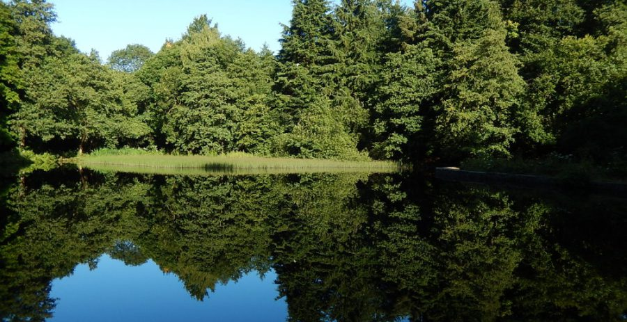 Reflections at Hind Wheel mill dam on a still, clear day. Photo: Sue Shaw.