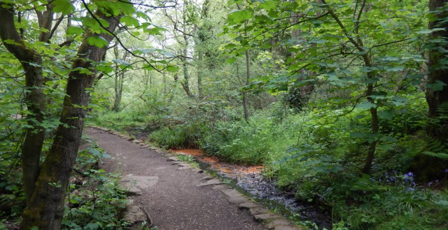 The Rivelin trail passing Holme Head mill dam. Photo: Sue Shaw, May 2015.