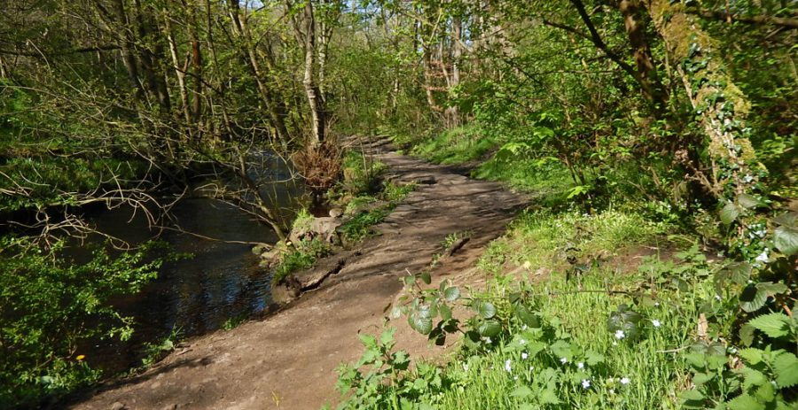 The former Plonk Wheel mill dam is situated on the bank to the right, above the Rivelin trail path – it is easy to miss! Photo: Sue Shaw, May 2016.