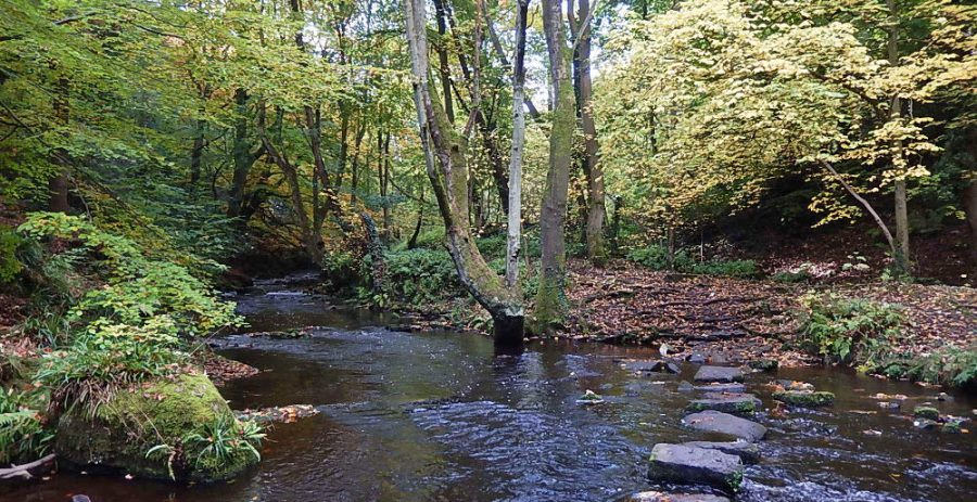 Stepping stones cross the river between Second Coppice Wheel and Third Coppice weir. Photo: Sue Shaw, October 2015.